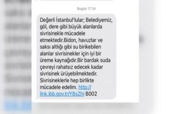 İstanbulda sivrisinek kabusu!